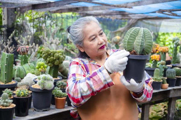 Elderly-woman-looking-at-integrity-of-cactus-tree
